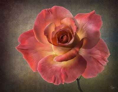 Photograph - Peach Rose by Endre Balogh