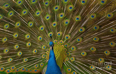 Photograph - Peacock by Andrew Michael