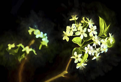 Photograph - Pear Blossom Glow by Kay Brewer