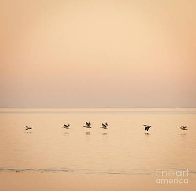 Animals Photos - Pelicans Africa by THP Creative
