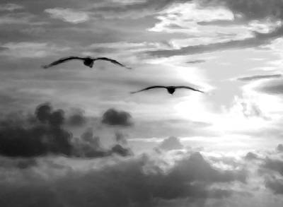 Digital Art - 2 Pelicans Flying Into The Clouds by Michael Thomas