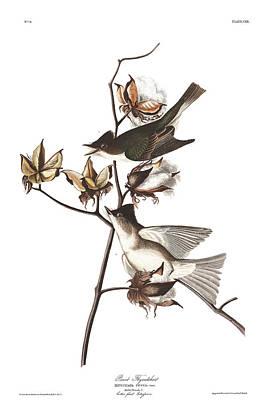 Flycatcher Wall Art - Painting - Pewit Flycatcher by John James Audubon