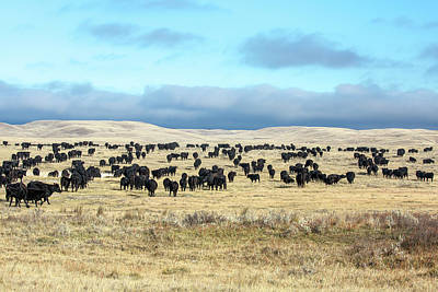 A Herd Gathers Art Print