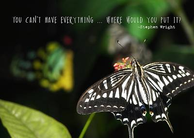 Photograph - Butterfly Perfect Quote by JAMART Photography