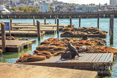 Photograph - Pier 39 Sea Lions by Benny Marty