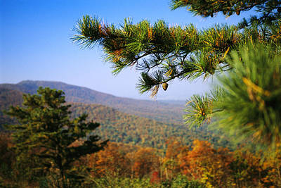 Pine Tree And Forested Ridges Art Print by Raymond Gehman