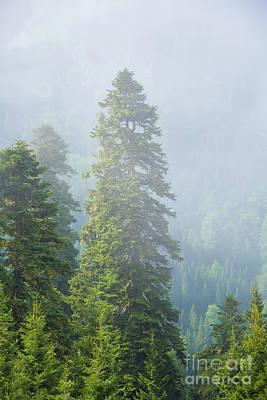 Pine Tree Mixed Media - Pine Tree by Svetlana Sewell