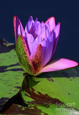 Photograph - Pink And Purple by Cindy Manero