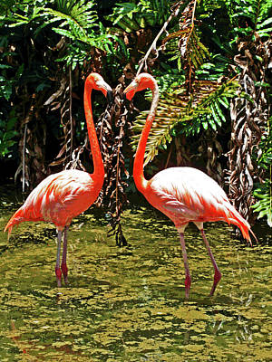 Photograph - 2 Pink Flamingos by Larry Oskin