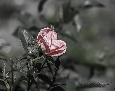 Photograph - Pink Flower by Gina Levesque