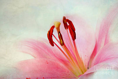 Old Age Photograph - Pink Lily by Nailia Schwarz