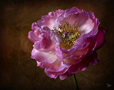 Photograph - Pink Peony by Endre Balogh