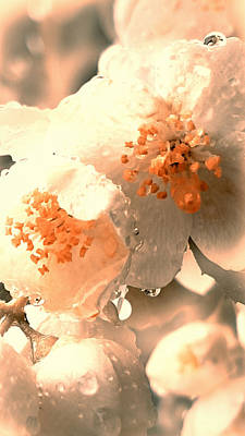 Photograph - Pink Spring by Lali Kacharava