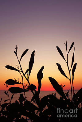 Plants On Sunset Art Print by Carlos Caetano