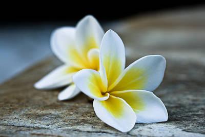 Photograph - Plumaria Flowers by Nila Newsom