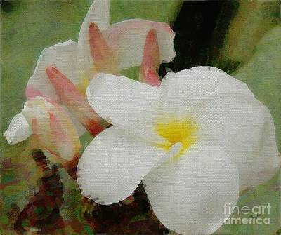 Fragipani Photograph - Plumeria by Sharon Johnston