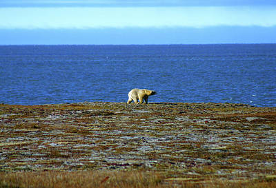 Photograph - Polar Bear by Anthony Jones