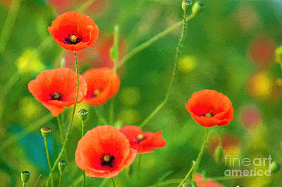 Photograph - Poppies by Andrew Michael