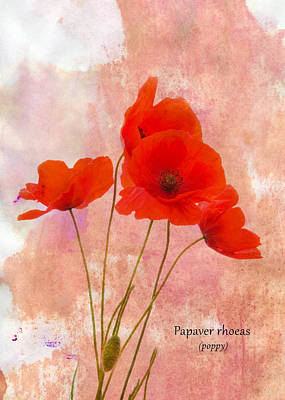 Poppy Art Print by Mark Rogan