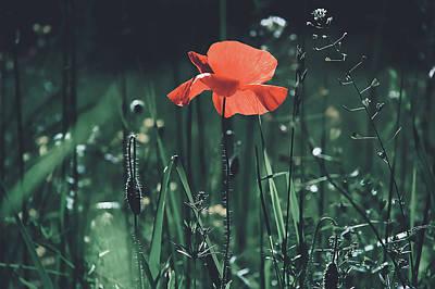 Photograph - Poppy by Pixabay