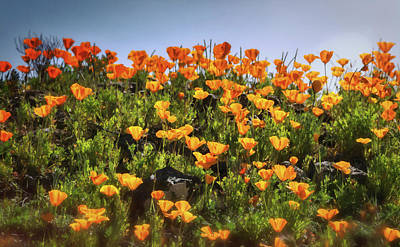 Photograph - Pretty Little Poppies  by Saija Lehtonen