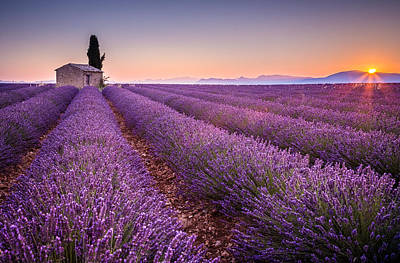 Photograph - Provence by Stefano Termanini