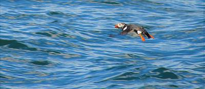 Photograph - Puffin by Jewels Blake Hamrick