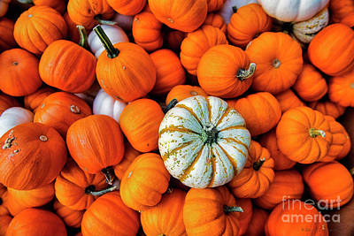 Photograph - Pumpkins by David Arment