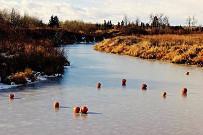 Photograph - Pumpkins On Ice  by Brian Sereda