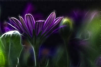 Abstract Flowers Photos - Purple Daisy by Stelios Kleanthous