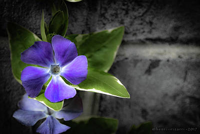 Photograph - Purple Garden Flower by Henri Irizarri