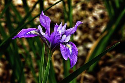 Photograph - Purple Iris by Camille Lopez
