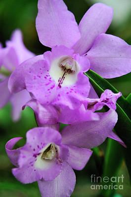 Purple Orchids Art Print by Sami Sarkis