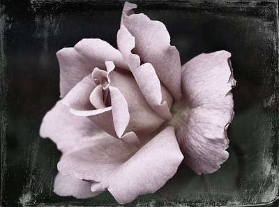 Portland Art Digital Art - Purple Rose by Cathie Tyler