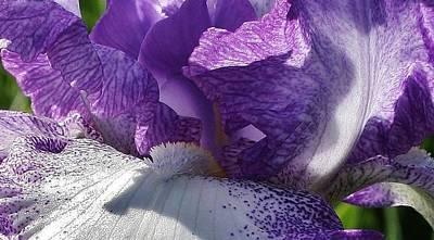 Photograph - Purple Splendor by Bruce Bley