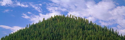 Pyramid Of Pines, Smith Ferry, Idaho Art Print by Panoramic Images