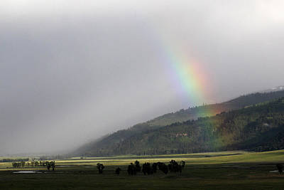 Photograph - Rainbow Hayden Valley Yellowstone Usa by Bob Savage