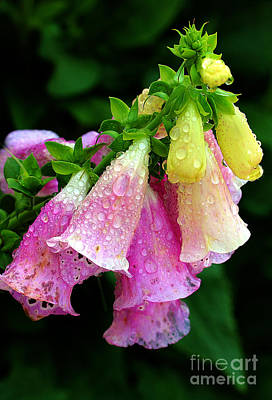Photograph - Raindrops by Judi Bagwell