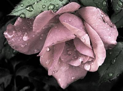 Photograph - Raindrops On Roses by Angela Davies