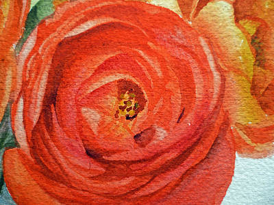 Most Commented Painting - Ranunculus Close Up by Irina Sztukowski