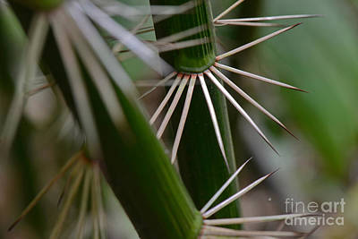 Calamus Photograph - Rattan Palm With Spikes by Francesco Tomasinelli