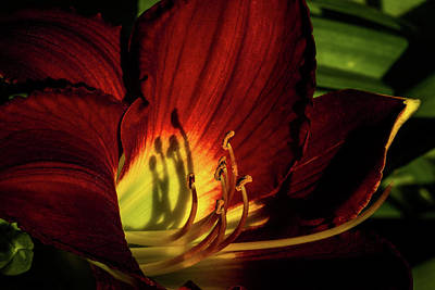 Photograph - Red And Yellow by Jay Stockhaus
