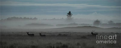 Photograph - Red Deer by Jorgen Norgaard