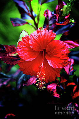 Photograph - Red Hibiscus 2 by Inspirational Photo Creations Audrey Woods