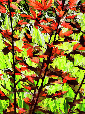 Photograph - Red Leaves  by Robert Ullmann