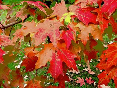 Photograph - Red Maple Leaves by Stephanie Moore