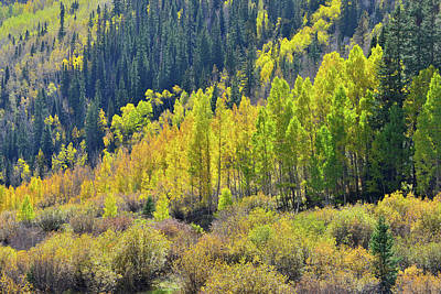 Photograph - Red Mountain Aspens by Ray Mathis