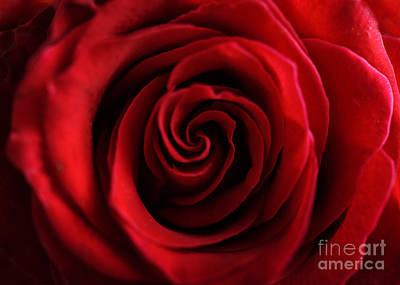 Postcard Photograph - Red Rose  by Jelena Jovanovic