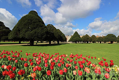 Photograph - Red Tulips At Hampton Court  by Julia Gavin