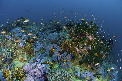 Reef Scene With Coral And Fish Print by Mathieu Meur